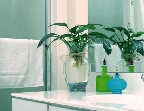 Add Colour and Boost Your Mood with Plants in the Bathroom