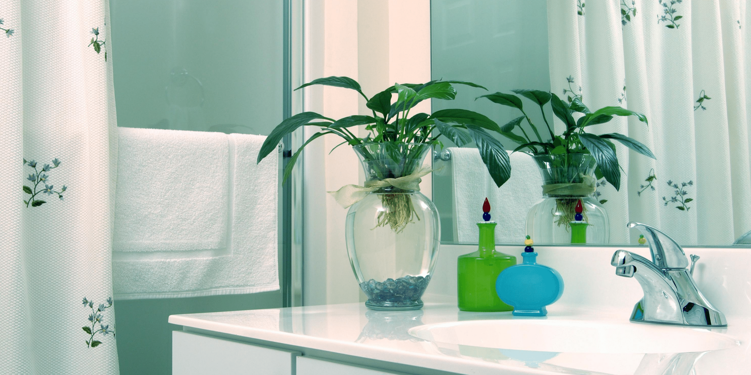 Add Colour and Boost Your Mood with Bathroom Plants